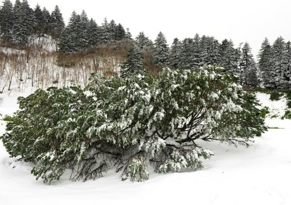 Зима на острове Кунашир. Фото РИА Новости