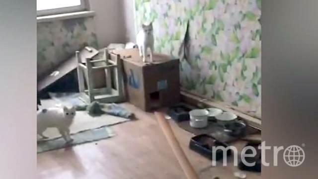 """Котов оставили в квартире одних. Фото скриншот из соцсетей, """"Metro"""""""