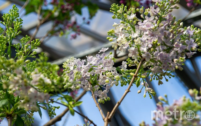 Ботанический сад. Фото Олег Золото, Предоставлено организаторами