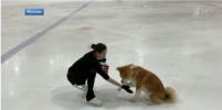 Фигуристка Алина Загитова вышла на лёд со своей собакой: видео