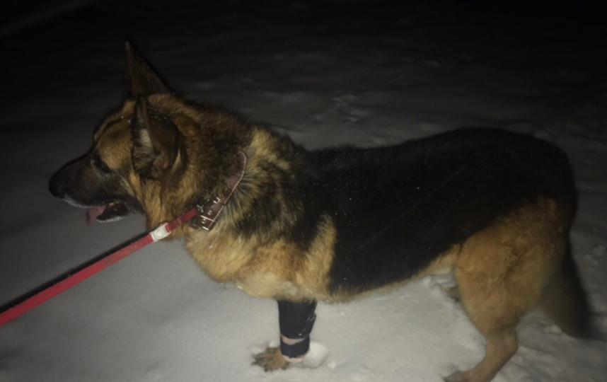 Лакки прошел длительное лечение и реабилитацию. Фото Предоставлено Вероникой Вершининой.