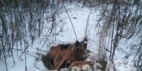 Овчарка пролежала в крови: известны подробности о собаке, которую сбил поезд под Петербургом