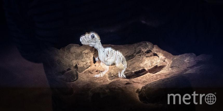 В США нашли тираннозавра размером с оленя