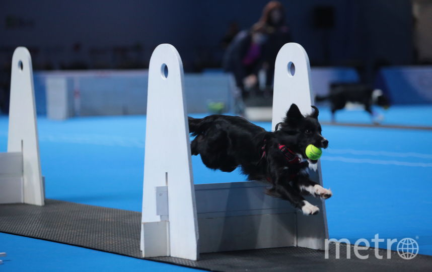 На выставке есть возможность определиться с породой будущего питомца и там же посетить мастер-классы по воспитанию и дрессировке собак. Фото предоставлены организаторами выставки.