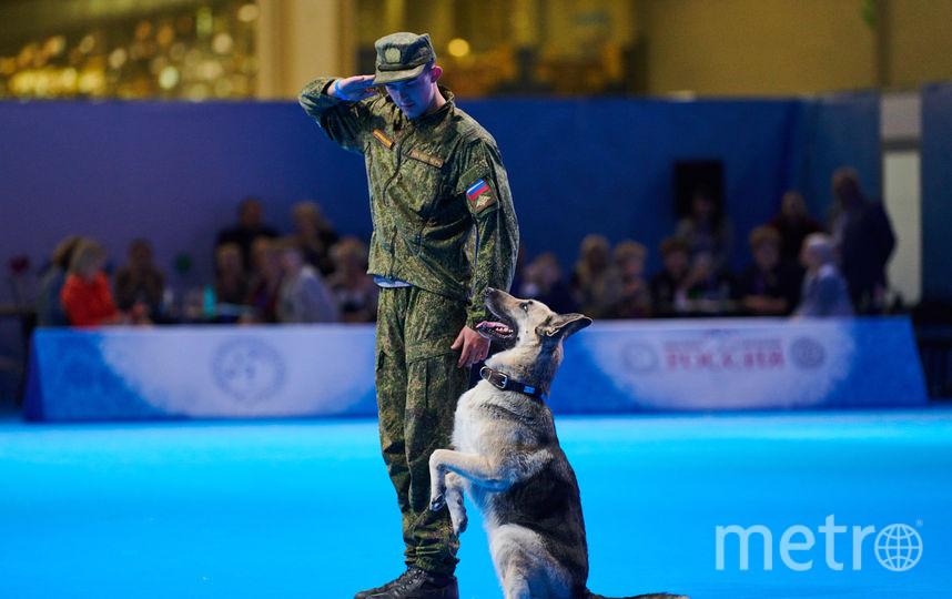 На выставке будут представлены в том числе и служебные собаки. Фото предоставлены организаторами выставки.