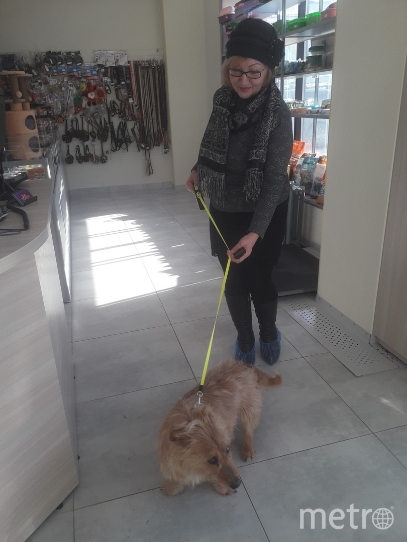 Спасённая собака возвращается в свою семью. Фото animal_rescue_service/Галина Великосельская