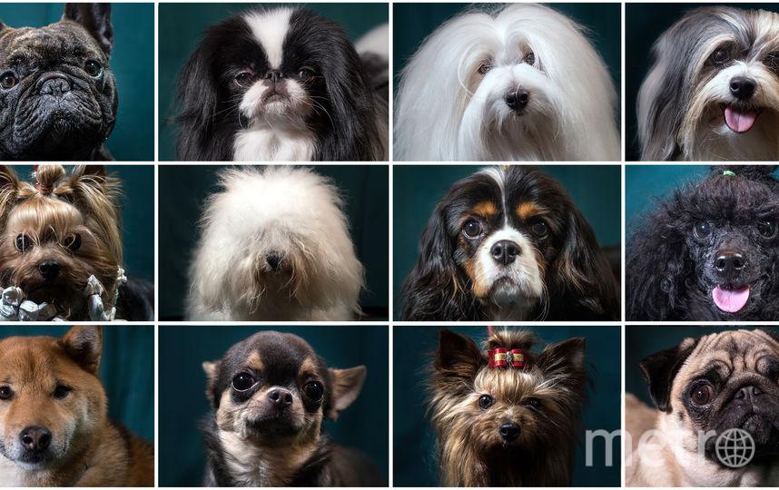 Собаки. Фото Getty