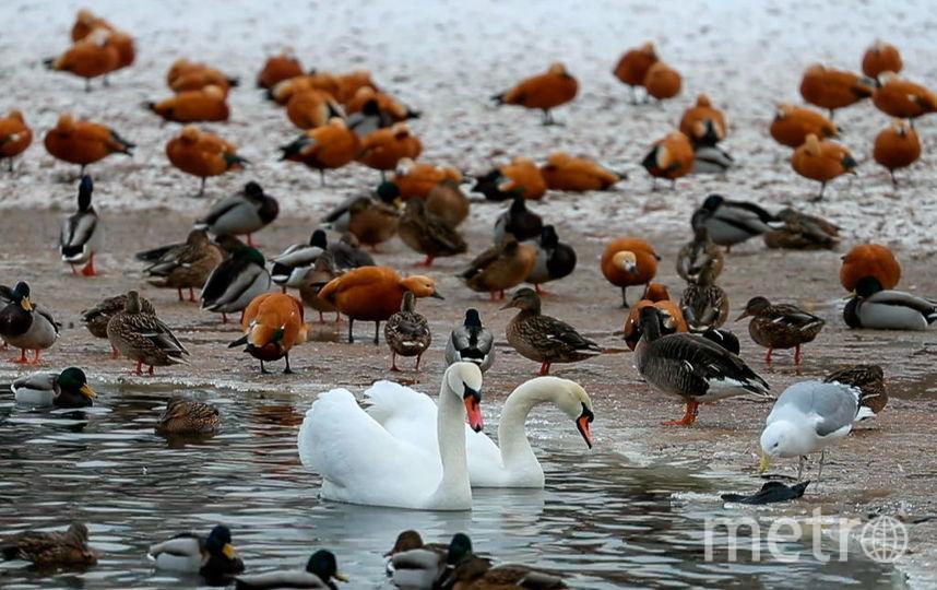 Москвичи смогут ознакомиться с инструкцией по правильному кормлению уток на стендах у водоёмах. Фото Getty
