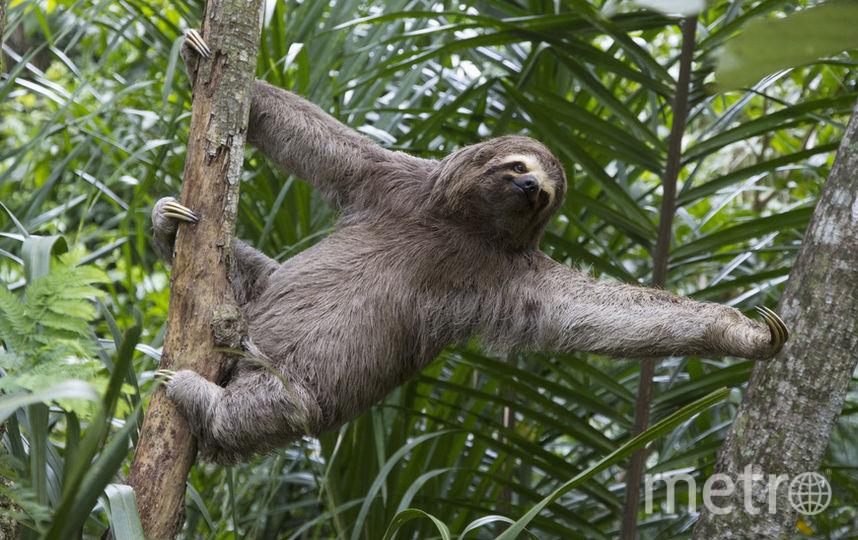 Ленивец. Фото Getty