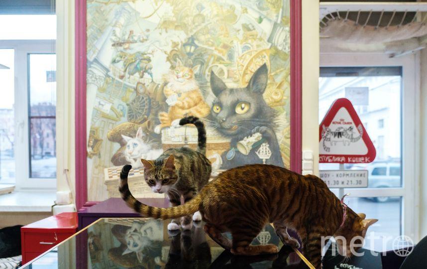 """Пушистые обитатели """"Республики кошек"""". Фото Алена Бобрович, """"Metro"""""""
