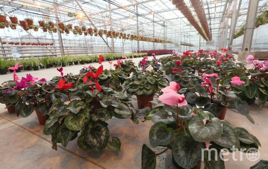 Цветы готовят к высадке в парниках. Фото gov.spb.ru