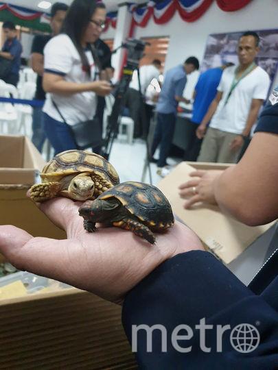 Животных обнаружили в невостребованном багаже. Фото AFP