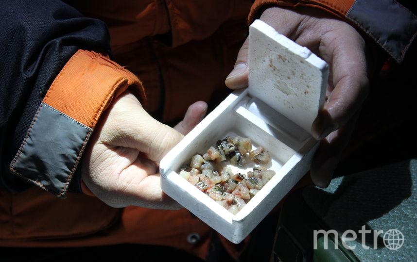 """Корюшка ловится на рубленое филе карася. Его хранят в пенопластовой коробочке, чтобы оно не замерзло. Фото Дарья Есенина., """"Metro"""""""