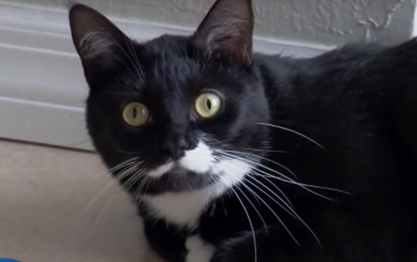 Кошка по кличке Белла. Фото Скриншот/CBS Miami, Скриншот Youtube