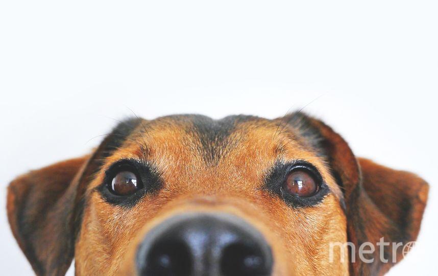В список потенциально опасных собак предлагается внести 69 пород. Фото https://pixabay.com/