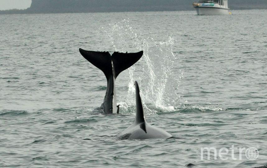Животных рекомендовано выпустить в бухту Охотского моря. Фото Getty