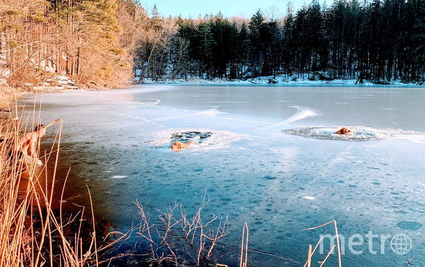 Спасение лабрадоров. Фото предоставили Тимофей Юрьев/CVJTF Group
