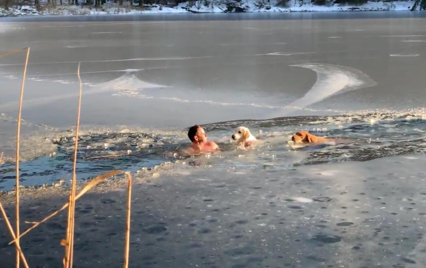 Спасение лабрадоров. Фото Скриншот видео/Тимофей Юрьев/CVJTF Group