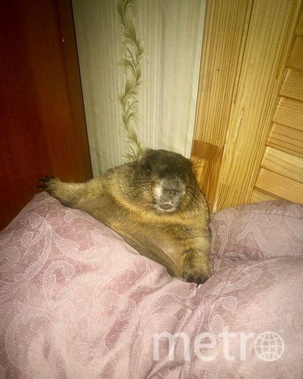 """Сурок Роджер всегда просыпается раньше хозяйки. Фото из личного архива Анны Поповой, """"Metro"""""""