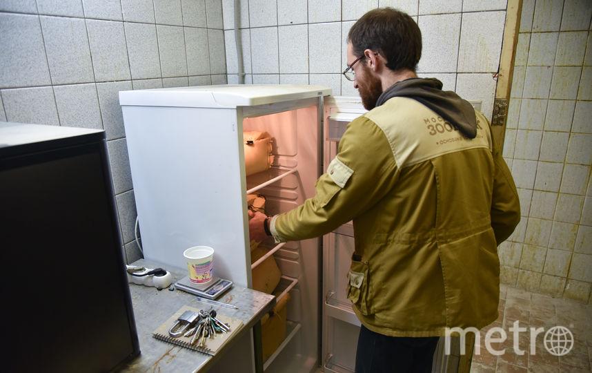 Грызуны зимовали в специальных холодильниках в полной темноте и при температуре +3...4°. Фото Василий Кузьмичёнок