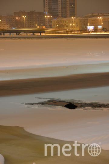 В Петербурге заметили ещё одну нерпу под мостом. Фото sealrescue, vk.com