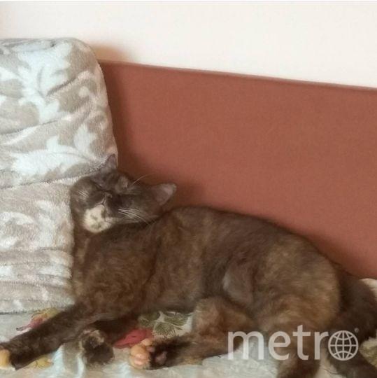 Кошка Юля. Фото Зинаида Грищенко.