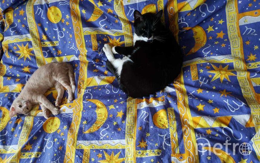 Добрый день! Меня зовут Алексеева Татьяна(+7(916)194-97-87). У нас два кортика Оскар и Марсель. Оскару 3 годика, Марселю 5 месяцев.Очень любят спать! Фото Татяна Алексеева.