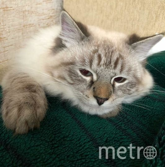 Добрый день! Высылаем вам фото своего кота Вальтера. Фото Вадим Черников.