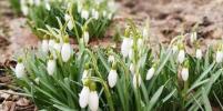 Весна приходит в Москву: самые красивые фото из соцсетей