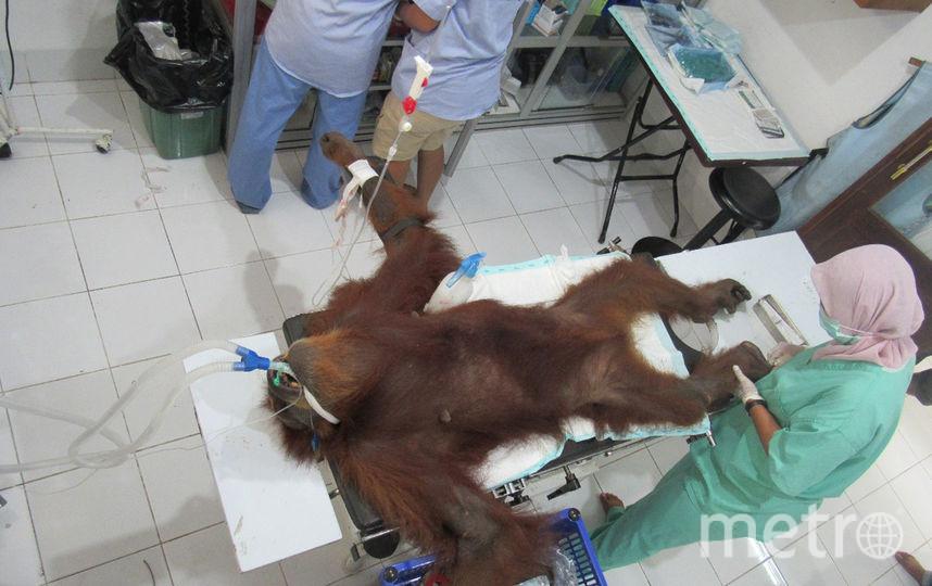 Ветеринары извлекли из тела Хоуп 74 пули. Фото AFP