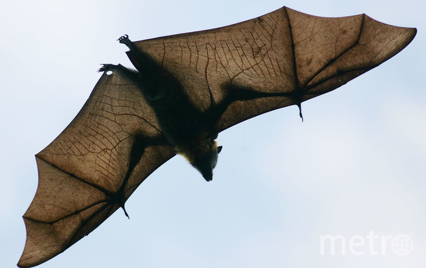 Летучие мыши. Фото Getty