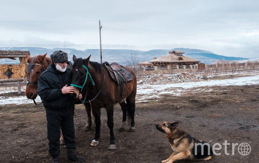 """На Кавказе эти лошади участвуют в горноспасательных операциях и считаются иппотерапевтами. Фото Алена Бобрович., """"Metro"""""""