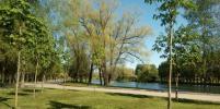 Старые вязы в парке Победы в Петербурге вырубят