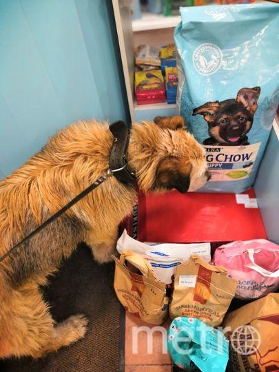 Спасенный пес Серега. Фото club175336494, vk.com