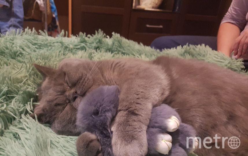 Кот Бублик.любитель поспать и похрапеть. Фото Юлия