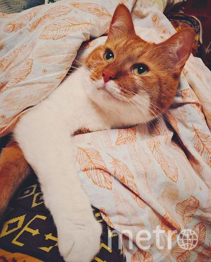 Мой красавец Цезарь) Спать он очень любит, а я вечно его отвлекаю. Фото Даша