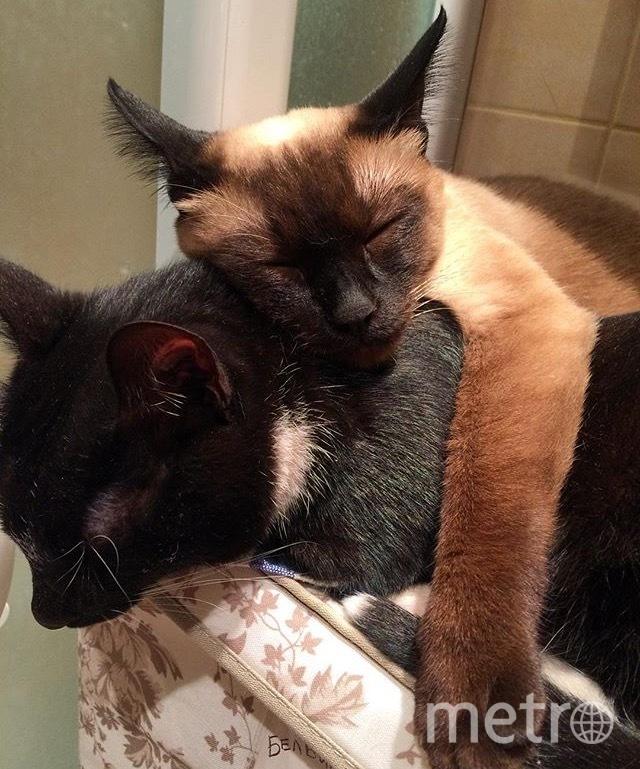 Микки и Йода. Фото Татьяна