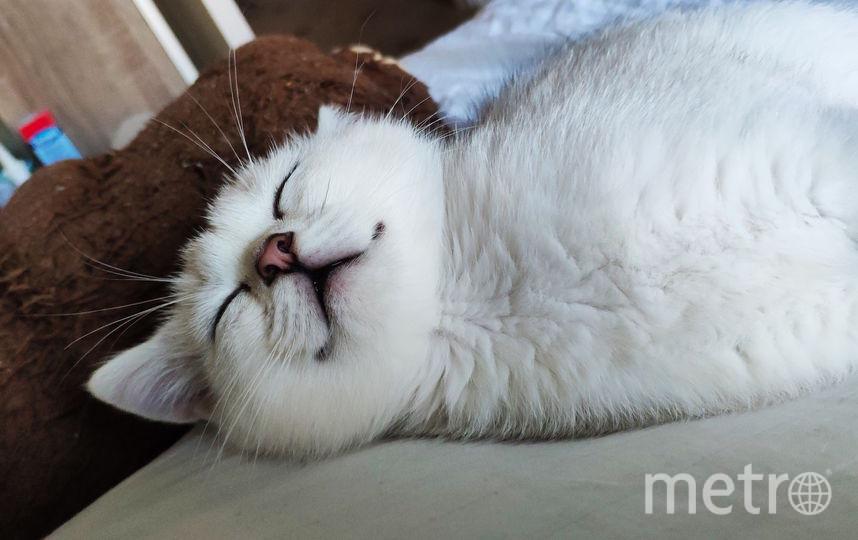 Марсик спит! Фото Лена