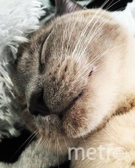 Кот по кличке Бильбо. Фото Вячеслав