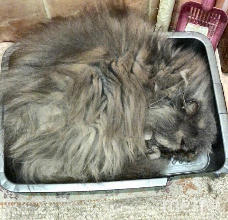 Кошка- Изабэль. Фото Юлия