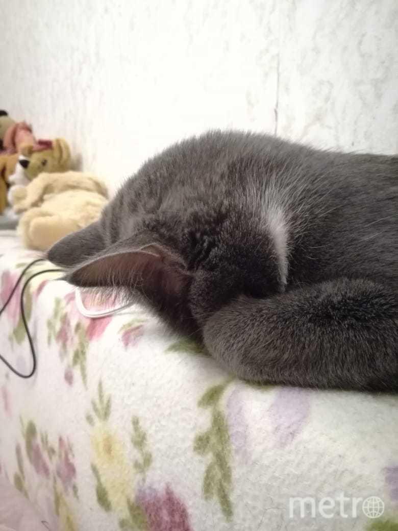 Это Дусенька. Обожает засыпать в неожиданных позах. Фото Мария
