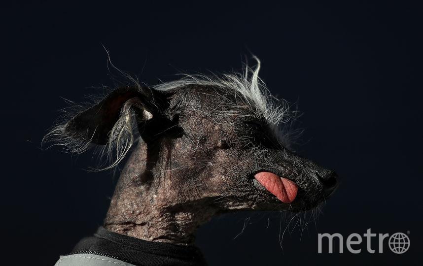 Пёс по кличке Чейз. Фото Getty