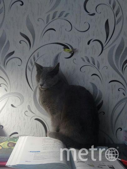 """За уроками засыпает не только ребенок, но и наша кошка Соня. Фото Войпе Оксана., """"Metro"""""""