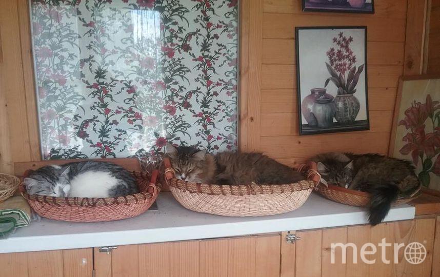 """Масик, его сестра Гюля и Лиза отдыхают после обеда. Фото Ирина, """"Metro"""""""