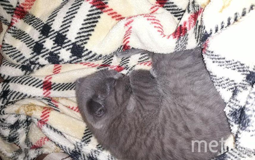 "Кошка Ася. Фото Ольга, ""Metro"""