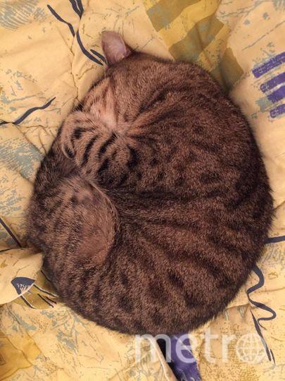 """Мою любимую кошечку зовут Лана, ей уже 13 лет и она так спит когда чувствует холода. Меня зовут Лена.. Фото """"Metro"""""""