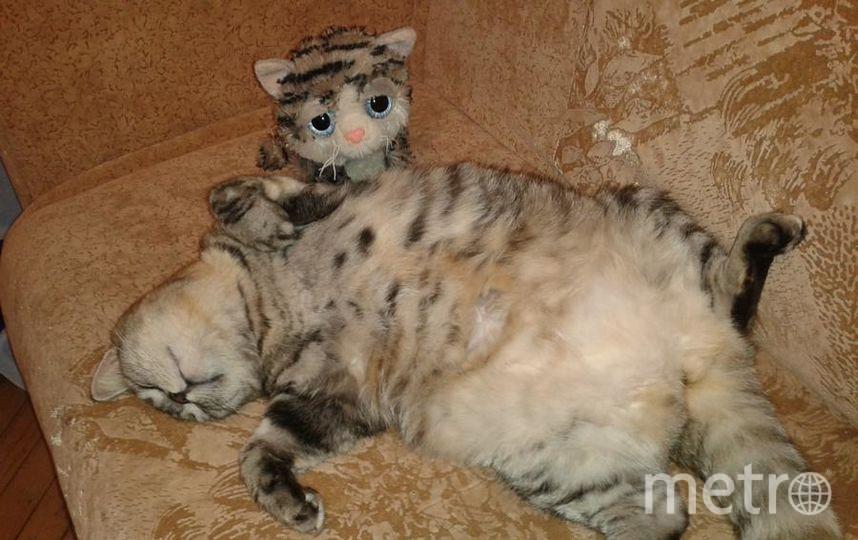 "Моя кошка Рокси. Фото Ольга Лялина, ""Metro"""