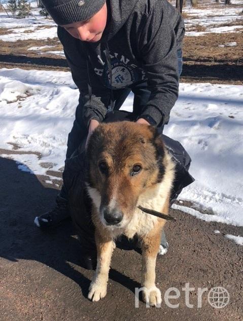 Собаку спас мальчик. Фото https://vk.com/id47527356, vk.com
