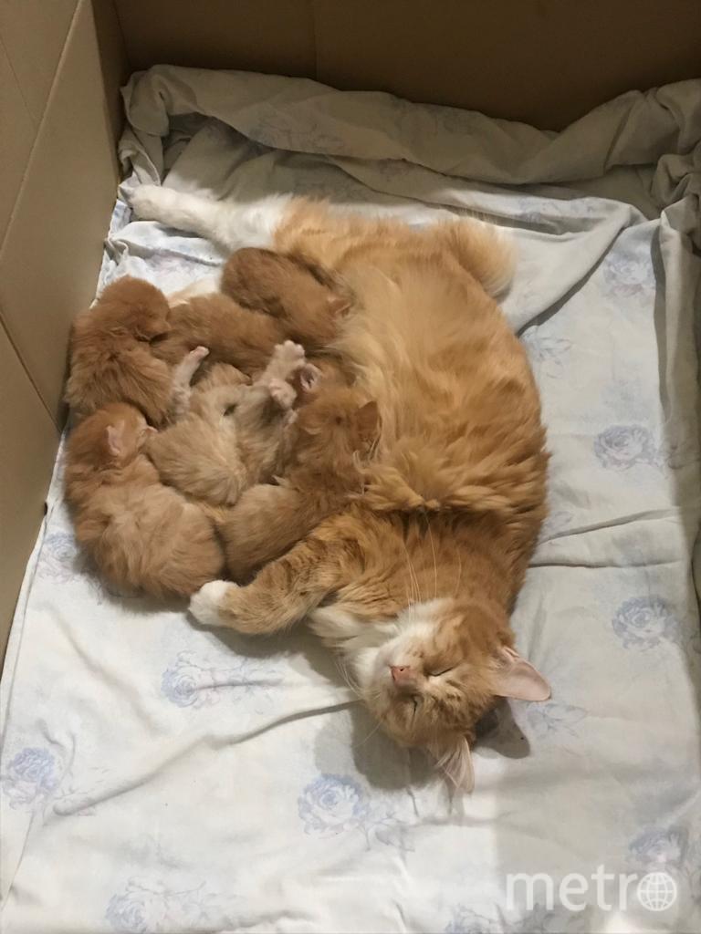 Кошка Ютта со своими 7-ми котятами. Фото Екатерина