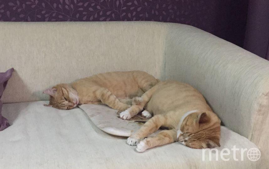 Тигруша и Белка. Фото Анастасия